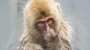 【長野県】入浴を覗かれてブチギレたサル、カメラマンに向かって中指を立てる!