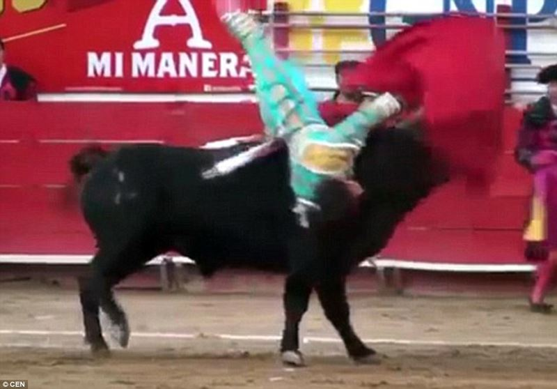 【逆襲の猛牛】 19歳の闘牛士のお尻に、牛の角がえげつない深さで突き刺さる