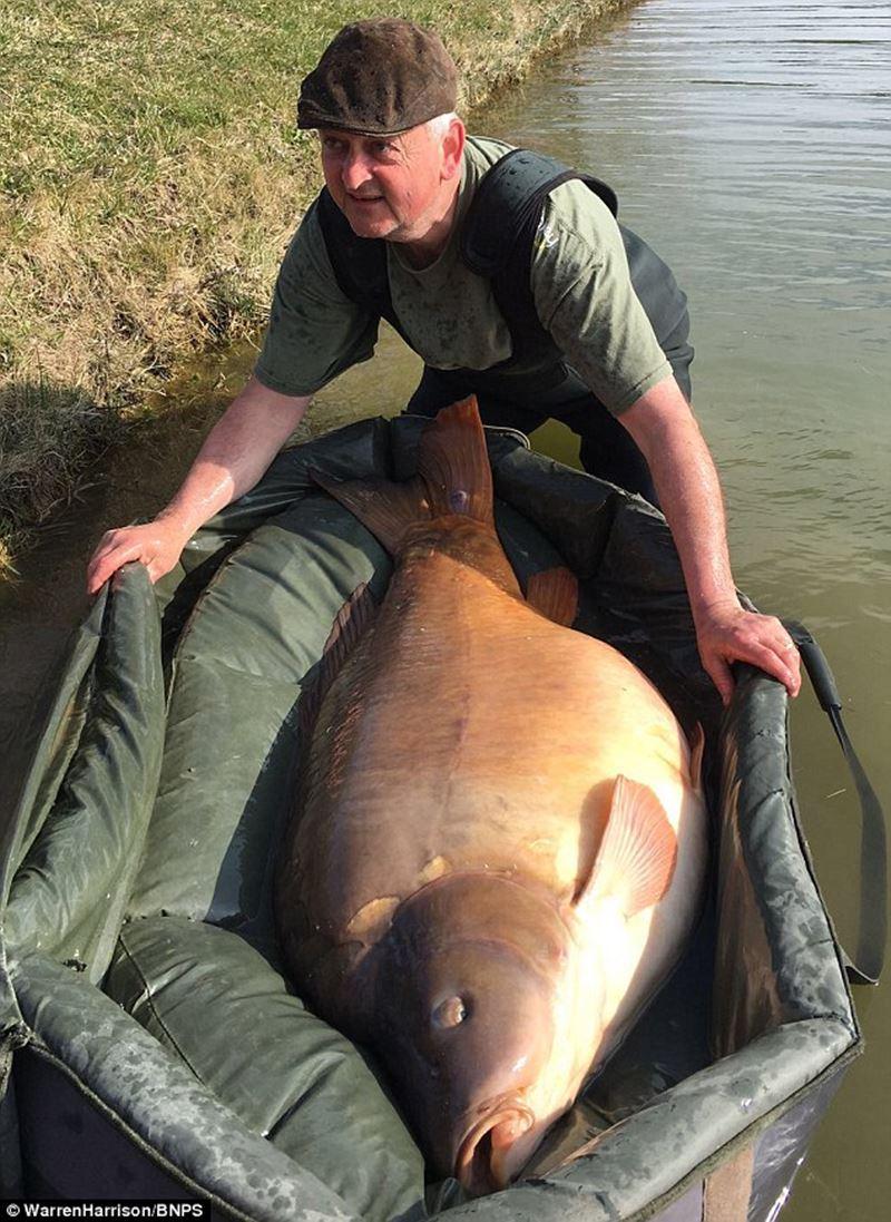 ハンガリーで150センチオーバーのモンスター鯉が釣り上がる!