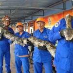 世界最長か? マレーシアの島で長さ約8メートルの巨大ニシキヘビが見つかる!