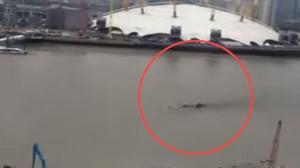 イギリスのテムズ川で謎の巨大生物が撮影される ネッシーか?それとも新種のUMAテッシーか?