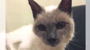実は亡くなっていた!世界最長寿としてギネスに認定された30歳の猫スクーター