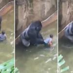 【優しいはずでは…】動物園の柵から落下!少年を引きずり回したゴリラを射殺