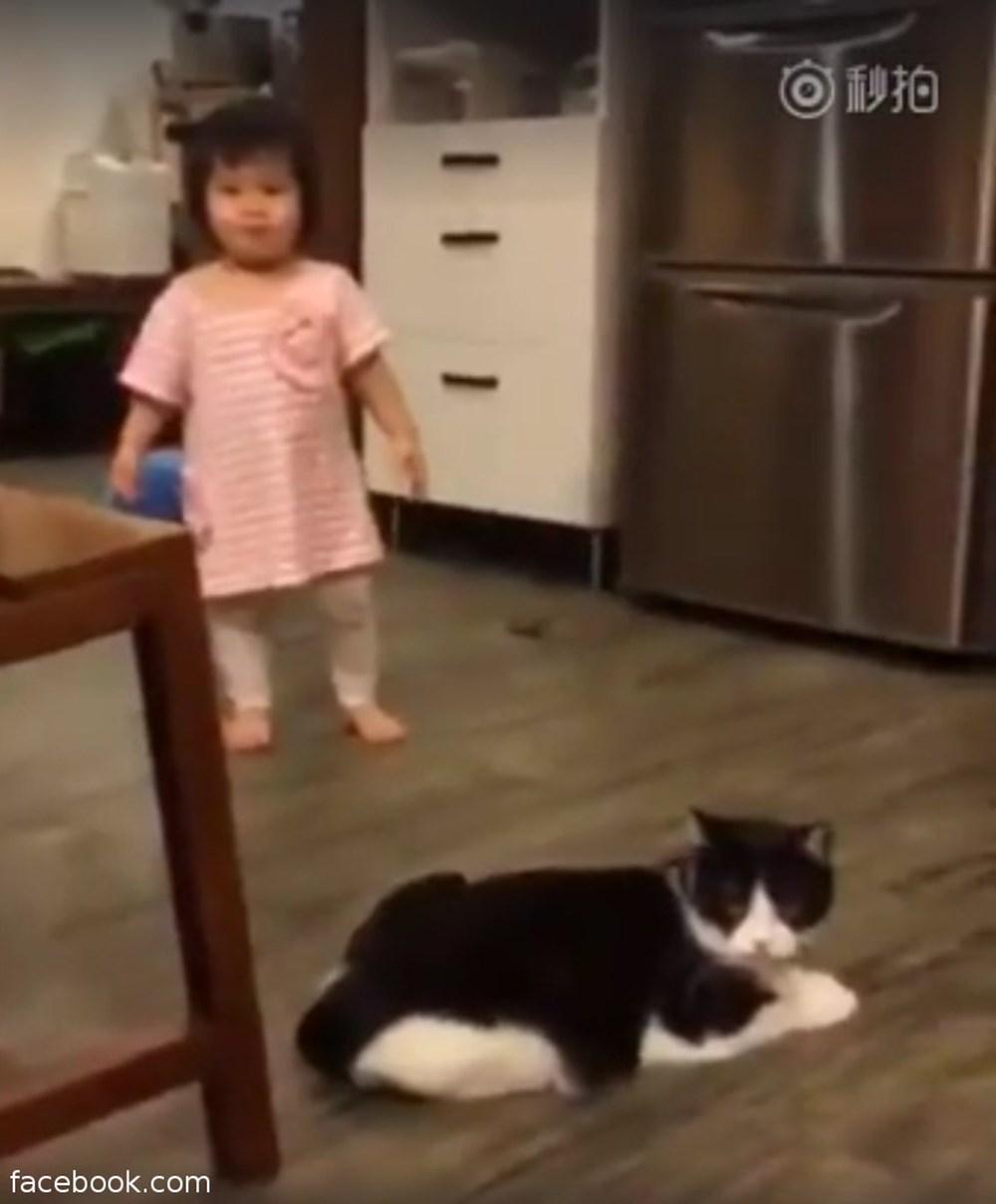 猫、やっぱり性格クソだった!幼女に足掛けをするも悪びれない