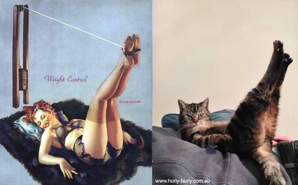 そのポーズ、セクシー! ピンナップガールズそっくりな猫 23選