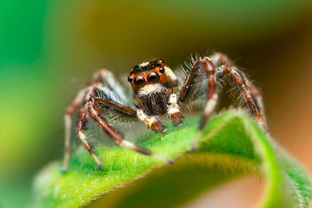 理論上、クモは地球上の全人類をわずか一年で食い尽くすことができるらしい
