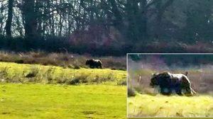 大型肉食獣はいないはずなのに… 英国で肉食獣らしき巨大生物の目撃情報が頻発