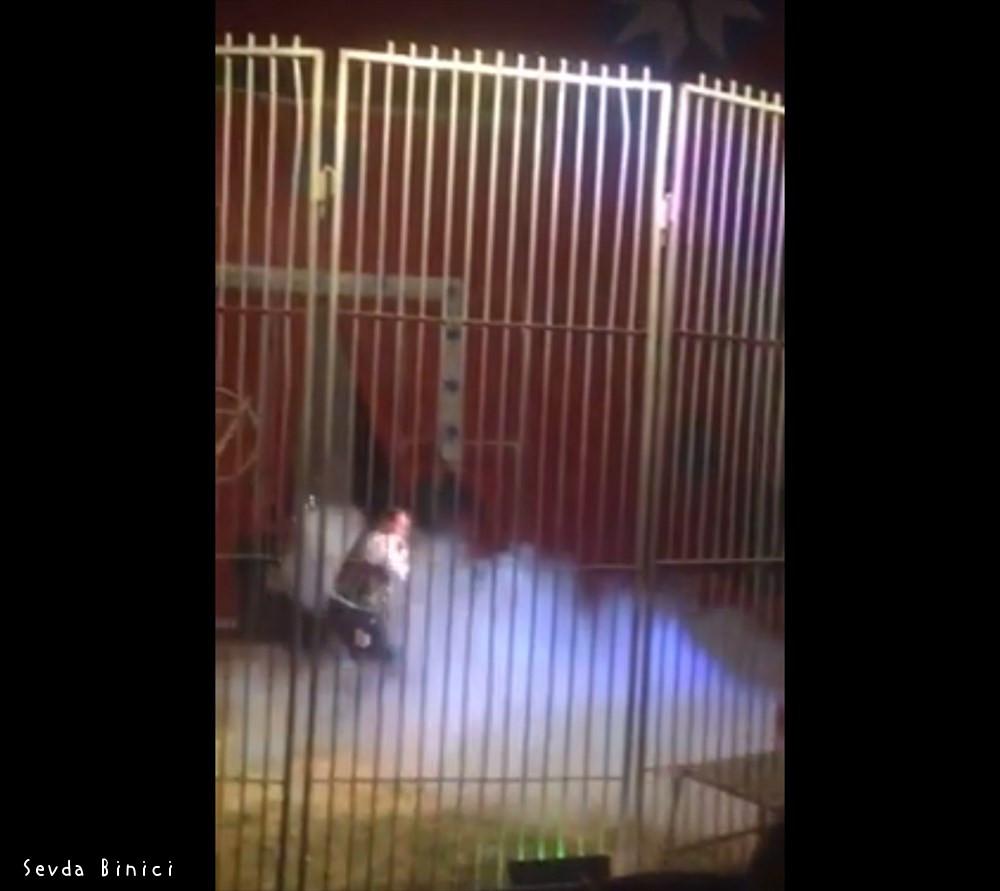 百獣の王を舐めるなよ! フランスのサーカスでライオンが人間を襲う