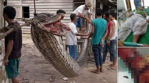 7メートルの大蛇を食おうとしたインドネシアの37歳男性、逆に左腕を持っていかれる