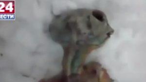 シベリア・イルクーツクでエイリアンの死骸を発見→ロシア政府がコメント