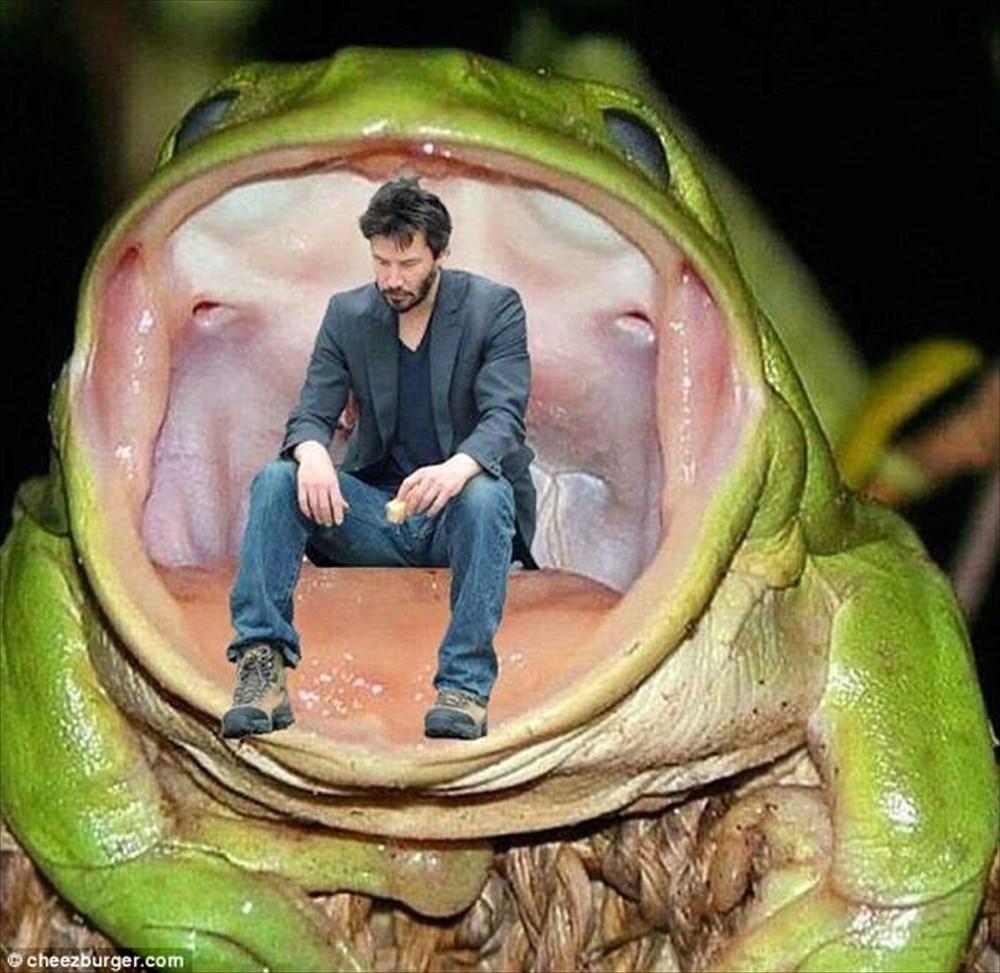 ぐわぁぁ食われる!イエアメガエルに捕食される毒ヘビの画像がネットで話題