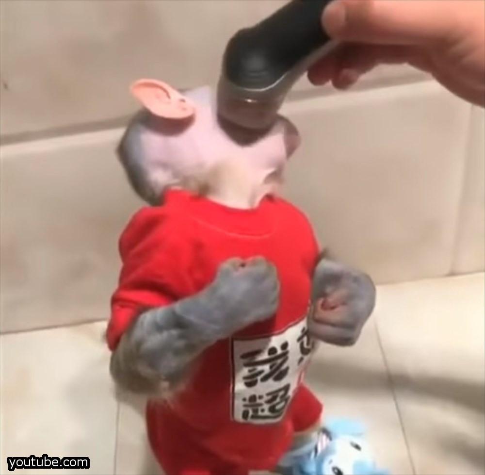 動物愛護団体激怒!シェーバーで毛を刈られ人間そっくりになった小猿